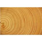 wood-178223_960_720.jpg